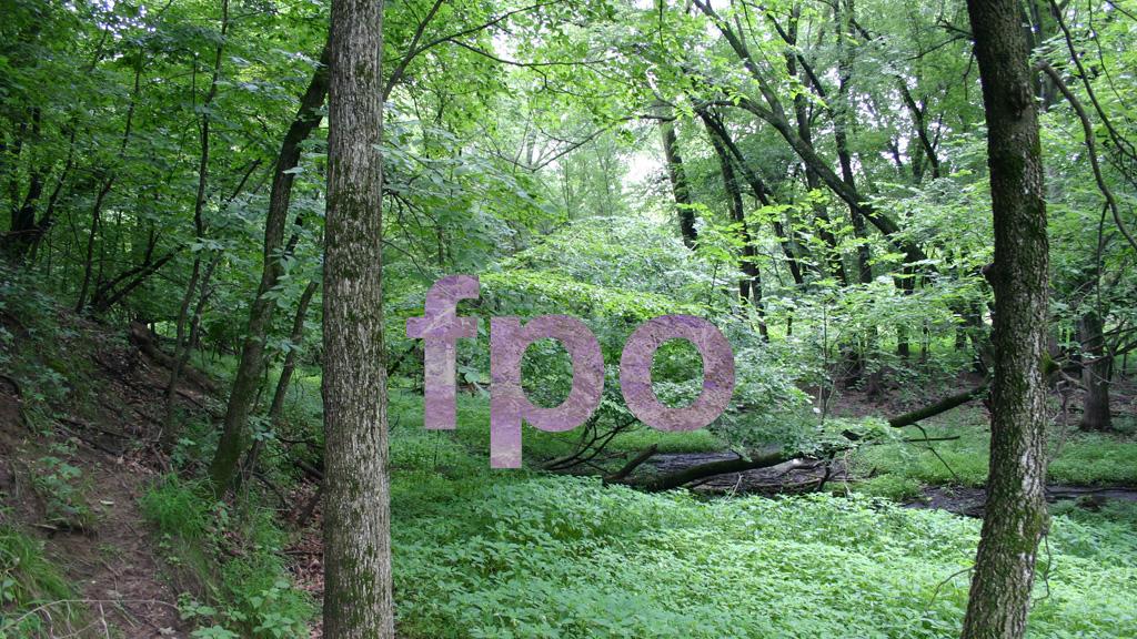testforest