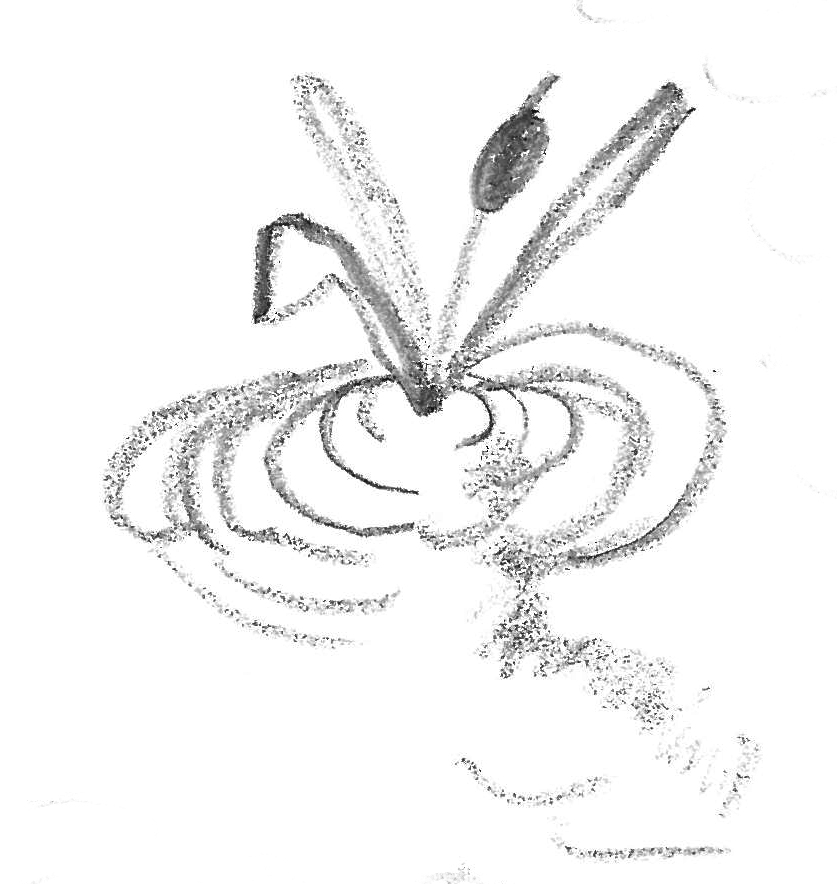 Student drawing of water plant