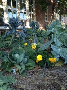 Barton Open School Garden